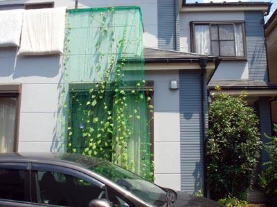 green_cartain01.jpg